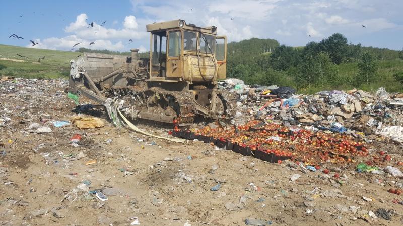 ВКрасноярске уничтожили около полутонны польских яблок