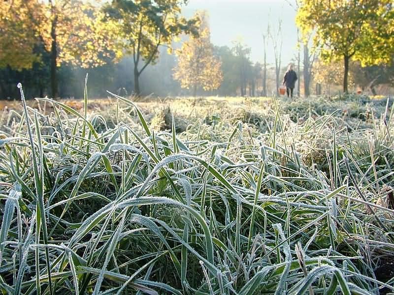 МЧС: НаКрасноярск надвигаются заморозки
