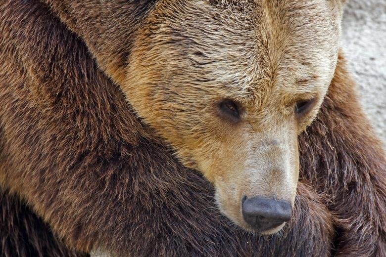 ВКрасноярском крае агрессивный медведь вышел клюдям