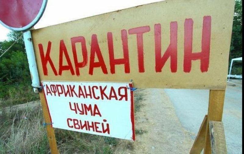 ВКрасноярском крае отменен карантин африканской чумы свиней