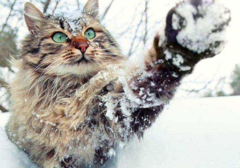 Синоптики обещают снежную итёплую неделю