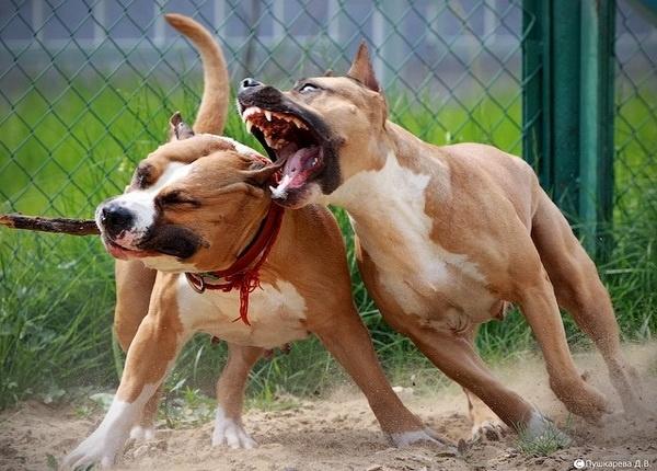 ВХакасии суд вынес вердикт владельцу собак, которые загрызли ребёнка
