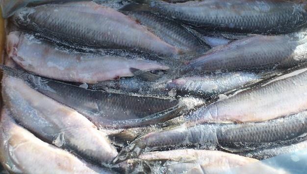 ВКрасноярске задержали 44 тонны свежемороженой приморской сельди