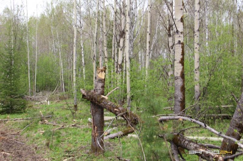 Отвели в лес за деньги и
