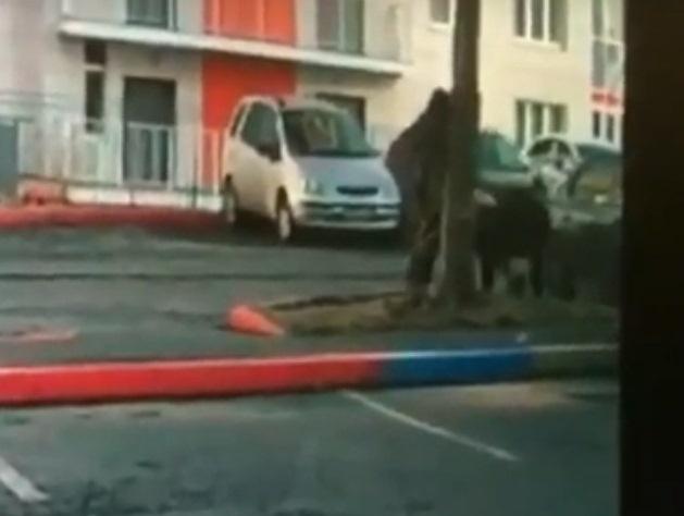 Красноярского живодера, бьющего собаку обасфальт, засняли навидео