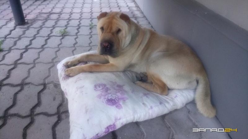 Пёс целый месяц ждал своего владельца — Назаровский Хатико